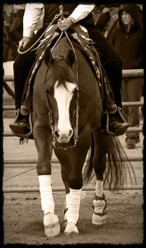 Reining Horses for Sale