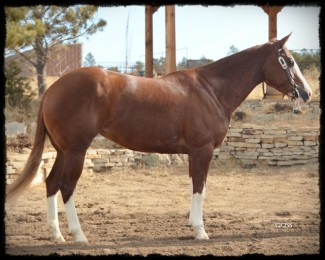 SOLD | Stylish Guns | Colonels Smoking Gun x BH Top Gun